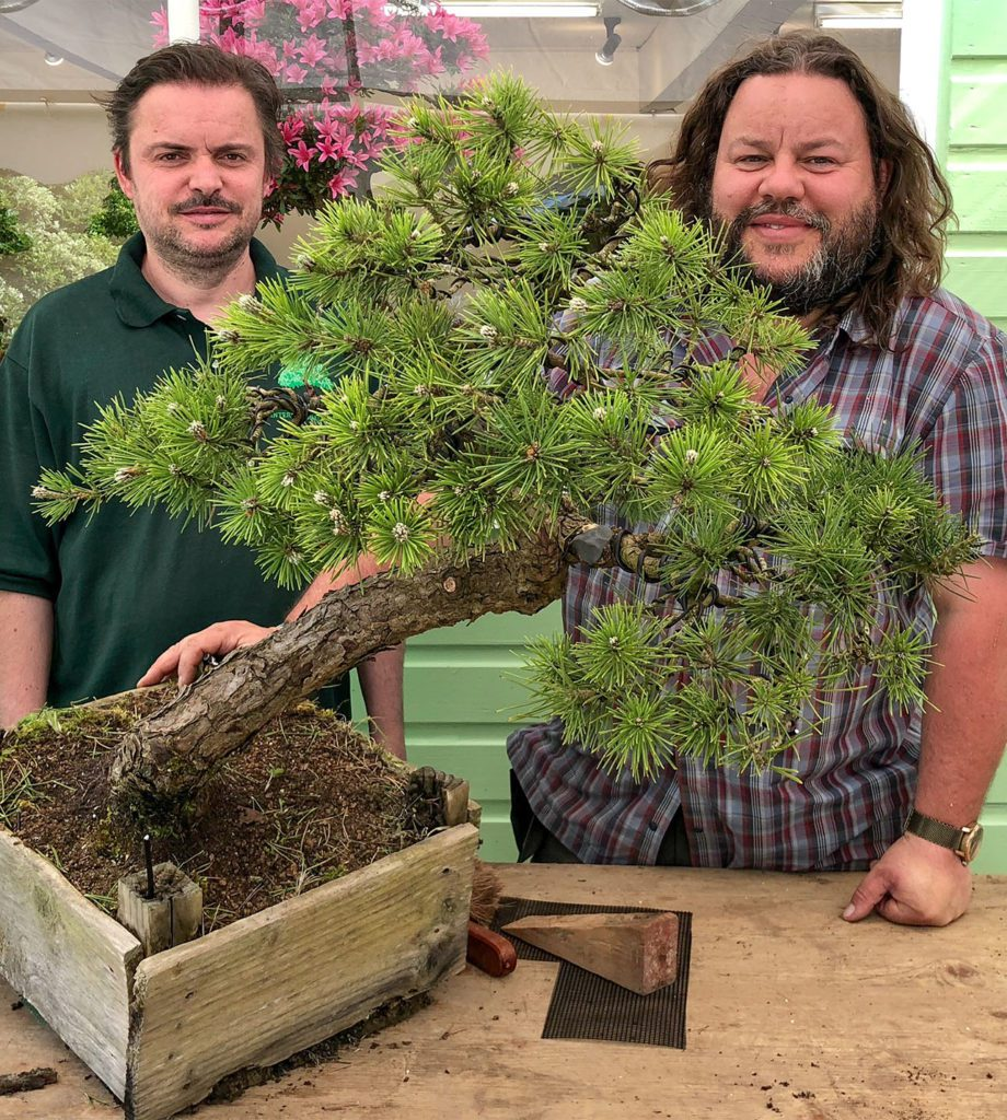 Professional bonsai workshop classes and lessons