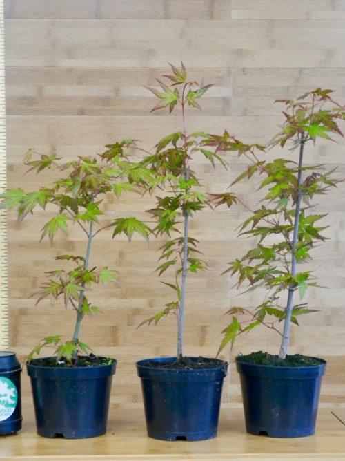 Young Plants / Seedlings