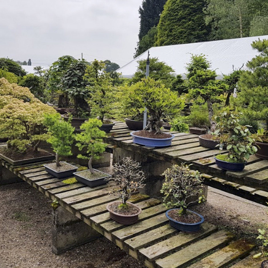 greenwood-bonsai-studio-011