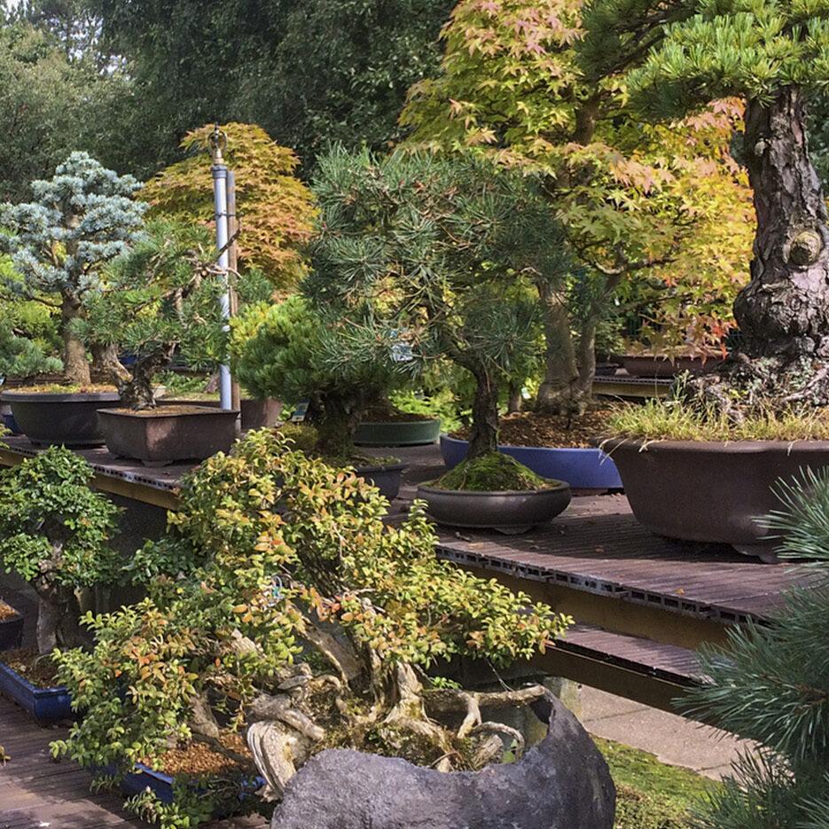 greenwood-bonsai-studio-09